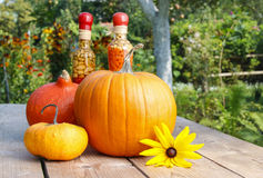 Pumpkins on wooden table in the garden Royalty Free Stock Photos