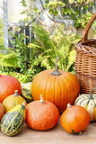 Pumpkins on wooden table in the garden Stock Images
