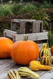 Pumpkins on wooden Table  Stock Image