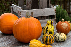 Pumpkins on wooden Table  Stock Images