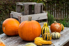 Pumpkins on wooden Table 3 Stock Photo