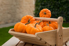 Pumpkins in a wooden trough Royalty Free Stock Photo