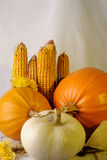 Pumpkins and yellow corn isolated Royalty Free Stock Photo