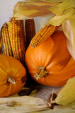 Pumpkins and yellow corn isolated Stock Photo