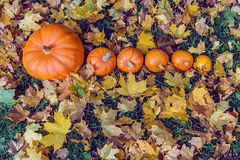 Pumpkins in yellow fallen leaves Royalty Free Stock Photo