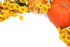 Pumpkins and yellow flowers on white background. Royalty Free Stock Images