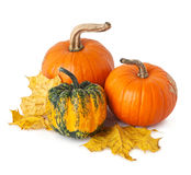 Pumpkins and yellow leaves Stock Image