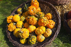 Pumpkins. Yellow pumpkin in a wicker basket Royalty Free Stock Images