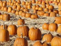Pumpkins3 Photographie stock libre de droits