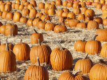 Pumpkins3 fotografia stock libera da diritti