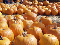 Pumpkins4 Photo stock