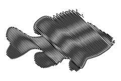 Pumpkinseed Sunfish silhouette vector. Lepomis gibbosus Royalty Free Stock Image