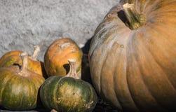 Pumpkinss familj Royaltyfri Fotografi