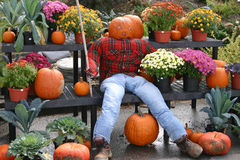 Pumplkin Headed Scarecrow Royalty Free Stock Image