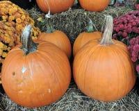 Pumpor Autumn Seasonal Display Royaltyfri Foto