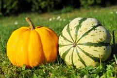 Pumpor halloween Arkivfoton