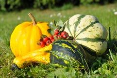 Pumpor halloween Arkivbild