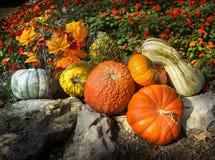 Pumpor, kalebasser, Autumn Leaves och sent att blomma blommor säger tacksägelse i denna sammansättning Arkivfoto