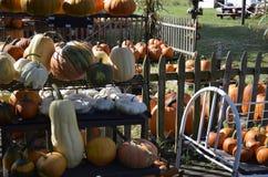 Pumpor, kalebasser och squash Royaltyfri Fotografi
