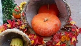 Pumpor och färgrika sidor Royaltyfri Fotografi