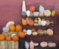 Pumpor och kalebasspumpor, kalebasser, squash, växter, mat, garnering, tegelstenväggen, järnställningen, apelsinen, gräsplan som  Royaltyfri Bild