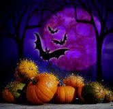 Pumpor och squashar med halloween bakgrund Royaltyfria Bilder