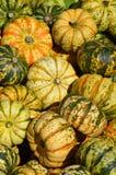 Pumpor på en bondemarknad Royaltyfria Bilder