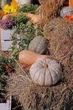 Pumpor på sugrör Arkivbilder