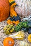 Pumpor squash och kalebasser Royaltyfri Fotografi