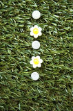 Punaises de fleurs blanches Image stock