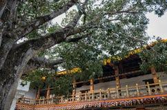 Punakha Dzong和bodhi树,不丹 库存图片