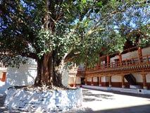 Punakha Dzong, Butão imagens de stock