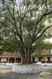 Punakha Dzong y árbol del bodhi, Bhután Imagenes de archivo