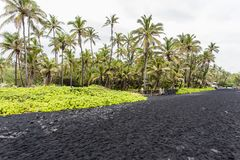 Punaluu黑色沙子海滩,夏威夷 免版税图库摄影