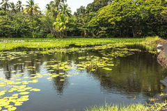 Punaluu黑色沙子海滩公园的,大岛,夏威夷池塘 免版税库存照片