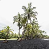 Punaluu black sand beach, Hawaii. Punaluu black sand beach of Big Island,  Hawaii Stock Photos