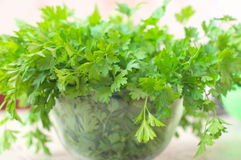 Punch fresh herb Stock Images