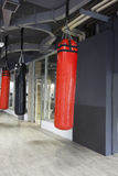 Punching bags in modern gym Royalty Free Stock Image