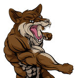 Punching Coyote Mascot. An illustration of a coyote animal sports mascot cartoon character fighting Stock Photo