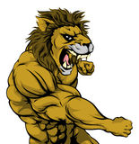 Punching lion mascot. A mean looking lion sports mascot fighting and punching with fist Royalty Free Stock Photo