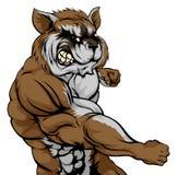 Punching raccoon mascot Stock Image