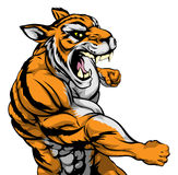 Punching tiger mascot. A mean looking tiger sports mascot fighting and punching with fist Stock Photos