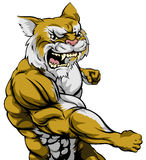 Punching wildcat mascot. An illustration of a tough wildcat animal character or sports mascot punching Royalty Free Stock Photography