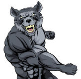Punching wolf mascot. Tough mean muscular wolf character or sports mascot in a fight punching with fist Stock Photography