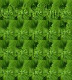 Punctuation  Made of Parsley Stock Photography