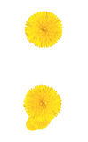 Punctuation marks made from dandelion flower. Isolated on white background stock photos