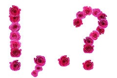 Punctuation of roses Royalty Free Stock Photos