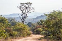 Punda Maria landscape in Kruger National park, South Africa Stock Image