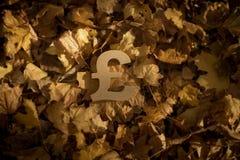 Pundvalutasymbol på Autumn Leaves i sol för sen afton arkivbild