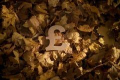Pundvalutasymbol p? Autumn Leaves i sol f?r sen afton royaltyfri fotografi
